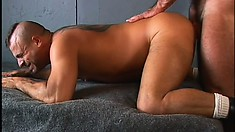 Inviting bear gives his ass up to his lover's hard quiver bone